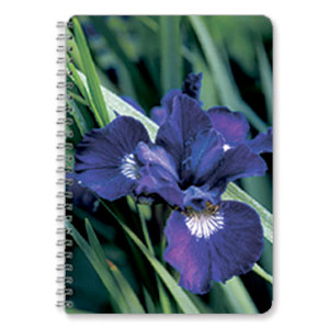 Iris-Flower-Notebook
